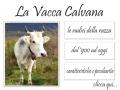 La Vacca Calvana